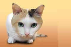写实风格可爱小猫咪矢量素材