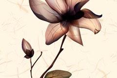 素雅花卉褶皱背景矢量素材