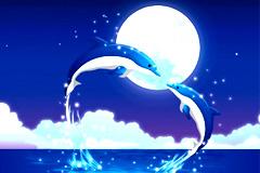 浪漫月光海豚矢量素材