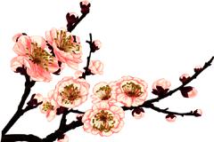 迎风傲雪盛开的梅花矢量素材