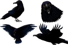 逼真绘制乌鸦矢量图