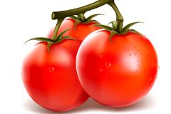 写实风格西红柿和茄子矢量素材