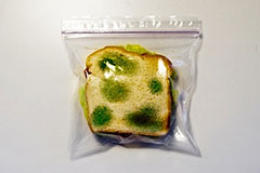 办公室防盗怪招之霉掉的面包片