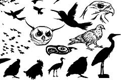 各种鸟类动物剪影矢量素材