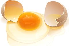 写实风格打破的鸡蛋矢量素材