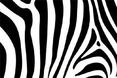 斑马花纹背景矢量素材