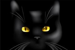 黑猫头部特写矢量素材