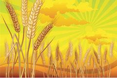 金色麦穗矢量素材
