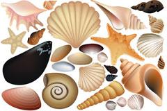 各种贝壳矢量素材