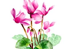 中国风优雅水墨花卉矢量素材