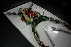 乐高的无限创意-解剖台上的青蛙