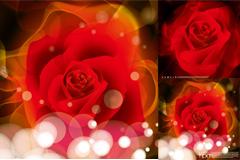 梦幻红玫瑰矢量素材