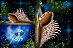 奇妙的海底水母和海螺矢量素材