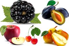 各种逼真绘制水果矢量素材