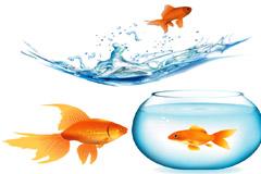 金鱼和鱼缸矢量素材