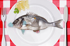 公益广告:盘子里的鱼