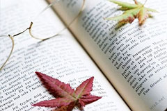 个人知识管理的29个原则