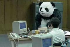 熊猫panda暴力奶酪广告官方完整