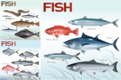 海底世界逼真鱼类矢量图