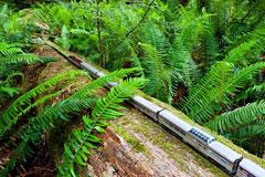 小火车加大拿号的奇幻之旅