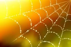 露水蜘蛛网矢量素材