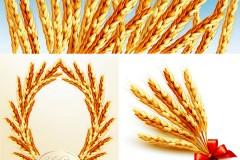 金黄小麦矢量素材