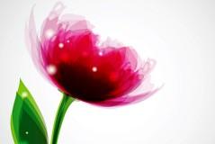 梦幻粉色花卉矢量素材