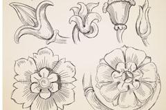 花卉素描矢量素材