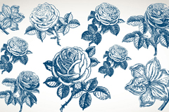 精美手绘花卉矢量素材