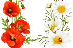 精美花卉植物插画矢量素材