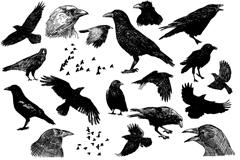 创意手绘鸟类矢量素材