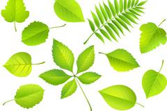 精美树叶设计矢量素材