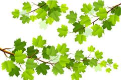 绿色枫叶树枝矢量素材