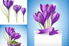 紫色水仙花矢量素材