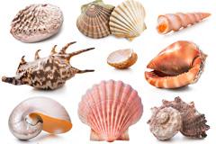 12种海洋贝类高清图片素材
