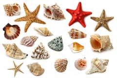 高清无水印海螺海星图片下载