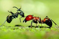 懒蚂蚁效应:懒于杂物,才能勤于动脑