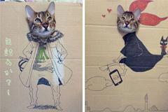 猫猫纸箱绘画