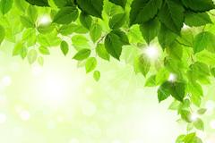 夏天精美树叶背景矢量素材