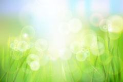 青青草丛和露珠矢量素材