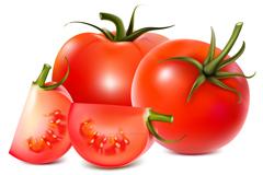美味番茄矢量素材