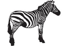 黑白斑马矢量素材