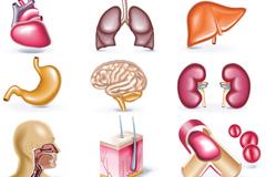 卡通人体器官图标矢量素材