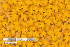 秋天枫叶背景矢量素材