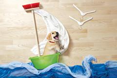 宠物摄影:猫猫狗狗去历险