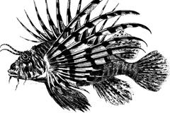 古董狮子鱼矢量素材