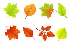 缤纷树叶设计矢量素材
