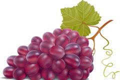 紫色葡萄矢量素材