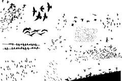 迁徙鸟群剪影矢量素材