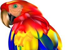 艳丽金刚鹦鹉矢量素材